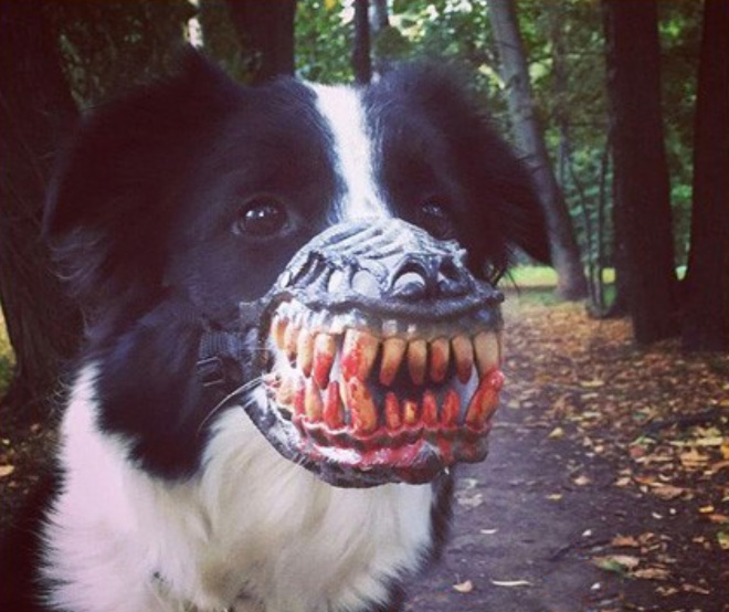 This muzzle will scare the hell out of everyone!